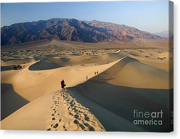 Sand Dunes Canvas Print by Tomaz Kunst