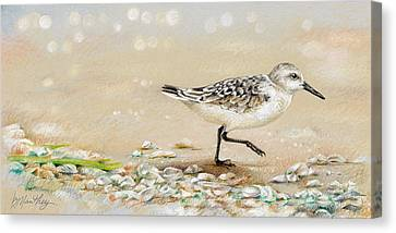 Sandpiper Study One Canvas Print by Bob Manthey