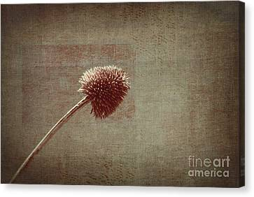 Sans Nom - S03p11t05 Canvas Print by Variance Collections
