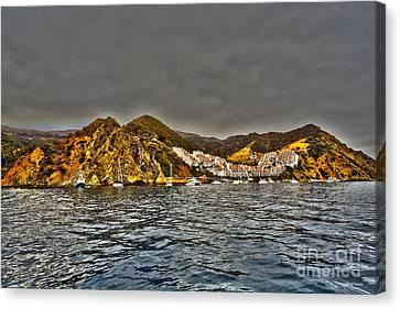 Santa Catalina Island Canvas Print by Cheryl Young