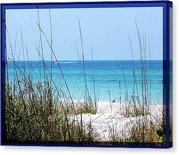 Sarasota Bay At Longboat Beach Canvas Print by Ginny Schmidt