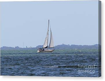 Sarasota Sailing Canvas Print by Theresa Willingham