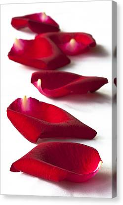 Scattered Rose Petals Canvas Print by Zoe Ferrie