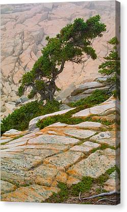 Schoodic Cliffs Canvas Print by Brent L Ander