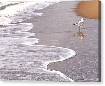 Sea Gull Reflection Canvas Print by Cindy Lee Longhini