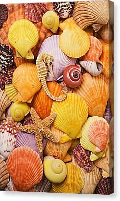 Sea Horse Starfish And Seashells  Canvas Print by Garry Gay