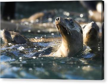 Sea Lion And Friends Canvas Print by Steve Munch