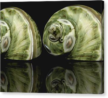 Sea Shells Photography Still Life Canvas Print by Ann Powell