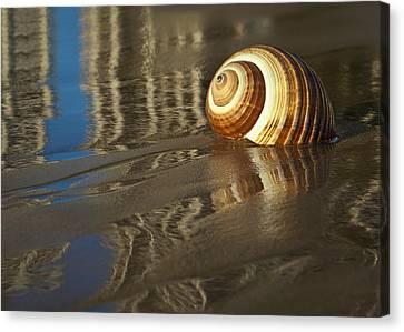Sea Shells Canvas Print by Renee Doyle