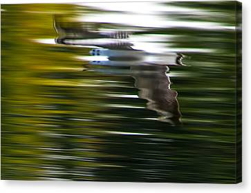 Seagull 2 Moewe 2 Canvas Print by H a r a l d B e r t l i n g