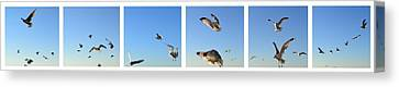 Seagull Collage Canvas Print by Michelle Calkins