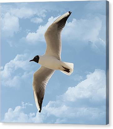 Seagull Flies Alone Under Blue Sky And Cloud Canvas Print by Margarete Nazarczuk