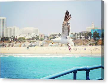 Seagull Flying Canvas Print by Libertad Leal Photography