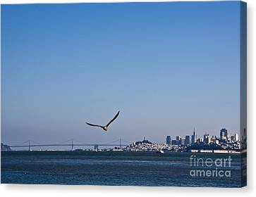 Seagull Flying Over San Francisco Bay Canvas Print by David Buffington