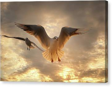 Seagull Canvas Print by GilG Photographie