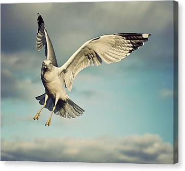 Seagull Canvas Print by Jody Trappe Photography