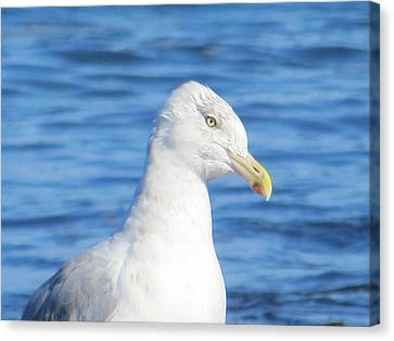 Seagull Canvas Print by Pamela Turner