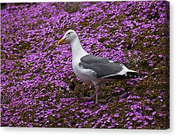 Seagull Standing Among Flowers Canvas Print by Garry Gay
