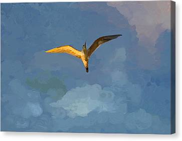 Seagull Sunrise Canvas Print by Miguel Pumarejo