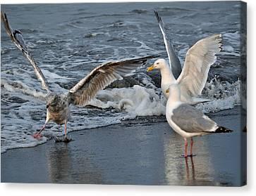 Seagull Treasures Canvas Print by Debra  Miller