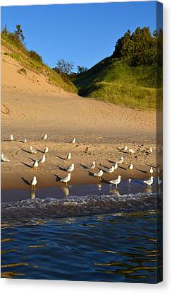 Seagulls At The Bowl Canvas Print by Michelle Calkins