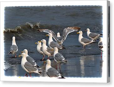 Seagulls Gathering Canvas Print by Debra  Miller