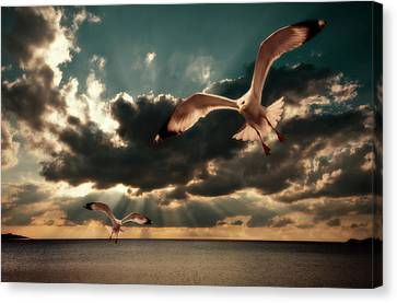 Seagulls In A Grunge Style Canvas Print by Meirion Matthias