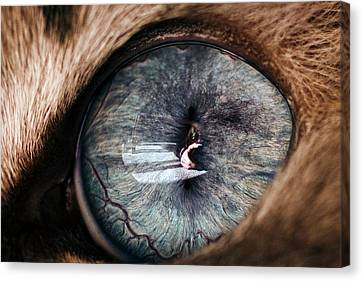 Self Portrait Through The Eyes Of Oliver Canvas Print by Paul Madura
