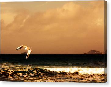 Sennen Seagull Canvas Print by Linsey Williams