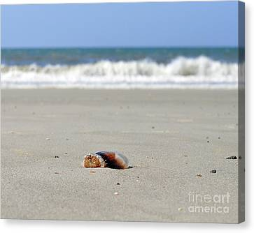 Separation Anxiety Canvas Print by Al Powell Photography USA