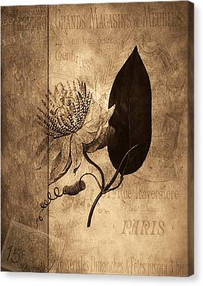 Sepia Botanical Canvas Print by Bonnie Bruno