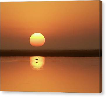 Serendipity Canvas Print by Photo by Richard Lionberger