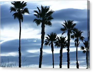 Seven Palms Canvas Print by Gilbert Artiaga