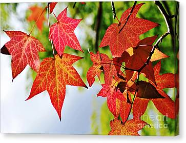 Shades Of Red Canvas Print by Kaye Menner