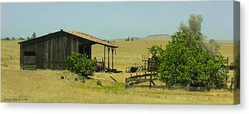 Shed In A Field Of Gold Canvas Print by Grace Dillon