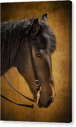 Sheep Herding Horse Portrait Canvas Print by Susan Candelario