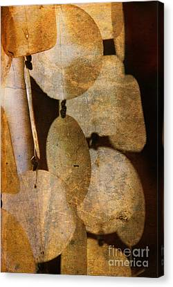 Shell Wind Chimes Canvas Print by Susanne Van Hulst