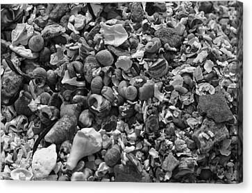 Shells Iv Canvas Print by David Rucker