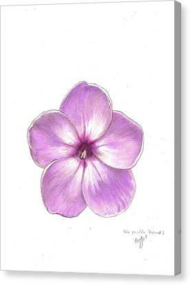 Shortwood Phlox  2 Canvas Print by Steve Asbell