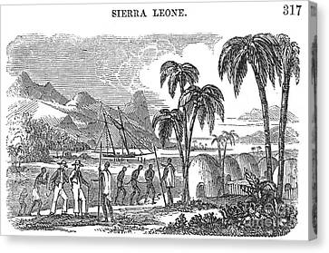 Sierra Leone: Slave Trade Canvas Print by Granger