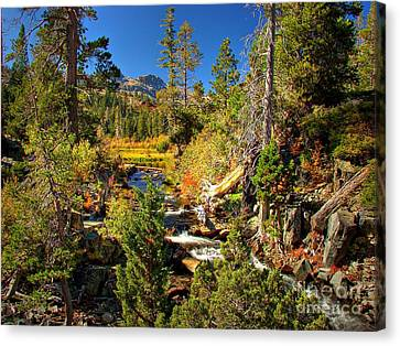 Sierra Nevada Fall Beauty At Lily Lake Canvas Print by Scott McGuire
