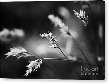 Silently - Black And White Canvas Print by Hideaki Sakurai