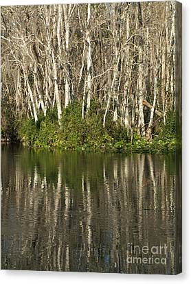 Silver River Reflections Canvas Print by Theresa Willingham