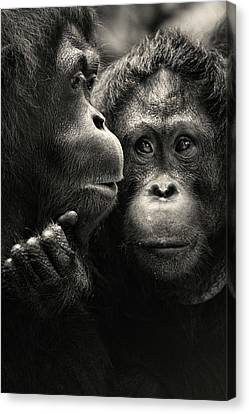 Singapore Zoo Canvas Print by By Toonman