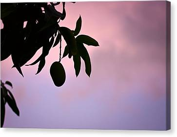 Single Mango On A Tree At Twilight Canvas Print by Anya Brewley schultheiss