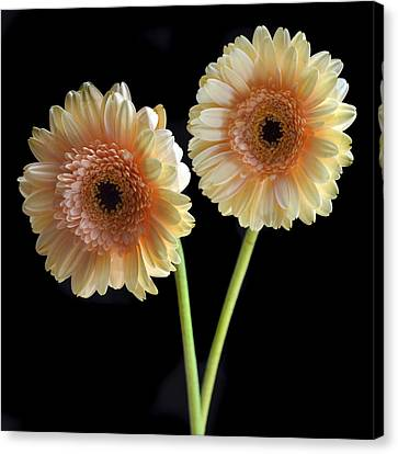 Sisters. Canvas Print by Terence Davis