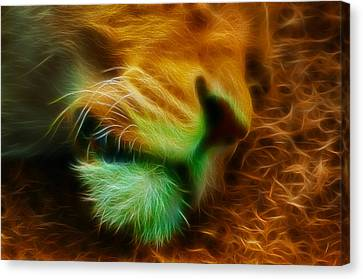 Sleeping Lion 2 Canvas Print by Chris Thaxter