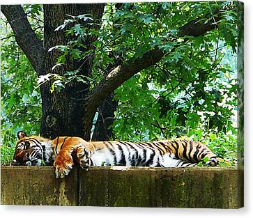Sleeping Tiger Canvas Print by Susan Savad