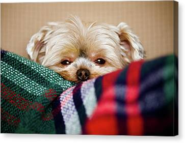 Sleepy Puppy In Blanket Canvas Print by Gregory Ferguson