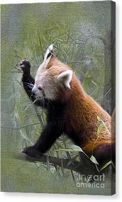 Small Panda Canvas Print by Heiko Koehrer-Wagner